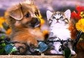 Belle amitié