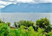 vigne et lac Léman