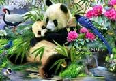 jolis pandas