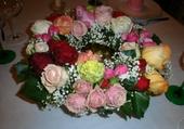 Différentes couleurs de roses