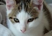 Moustache mon chat ???