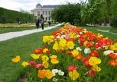 A base de tulipes
