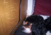 mon chien chéri