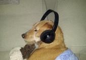 chouette la musique