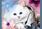chat rêveur