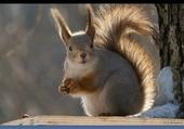 écureuil étonné