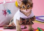 chaton cravaté