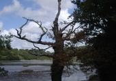 Arbre mort Finistère 2008