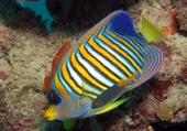 barrière de corail Australie