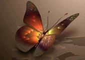 Puzzle joli papillon
