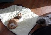 Puzzle choum et le chat