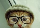 le chat intello