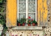 Windows - Flowers