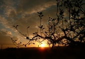 coucher de soleil sur Chanas