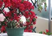 Puzzle cactus et bougainvillée