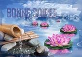 fontaine et lotus