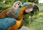 singe et perroquet