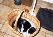 Puzzle chat dans panier