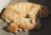 Puzzle sommeil des chats
