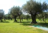 champ d olives