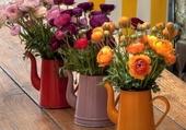 trois jolis pots de fleurs