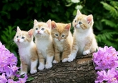 Puzzle chatons curieux