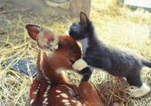 Puzzle bisou chaton bambi