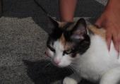 Gipsy la chatte