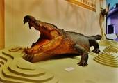 enorme animal naturalisé