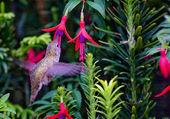 Puzzle colibri