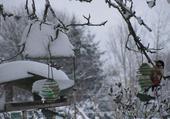 l'hiver et les oiseaux
