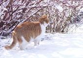 Puzzle Chat dans la neige
