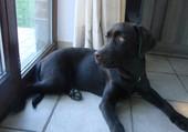 chien devant une fenetre