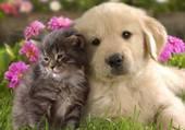 un amour tendre comme on les aime
