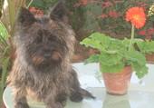 chien et fleur