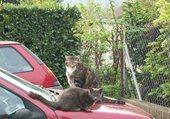 Tom et Lilou