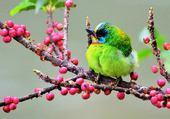 Puzzle Oiseau vert