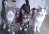Mes 3 bébés