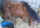 Nuage, petit poney