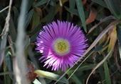 fleur dans l'ombre