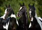 les 3 chevaux