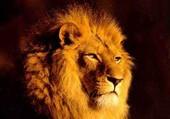 lion sage