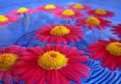 Fleurs sur l'eau