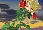 La Rose Transfusée
