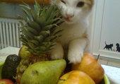 Puzzle les fruits c'est la santé!!