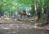 un beau cerf