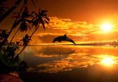 dauphin- coucher de soleil