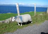 Magnifique Irlande !