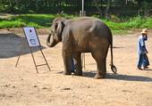 Elephant_peintre