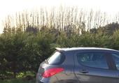 308 + arbres